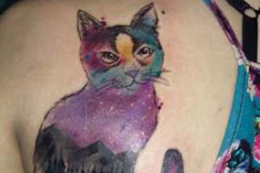 colour-cat-detail-wonderlandstudio