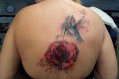 rose-back-colour-wonderlandstudio